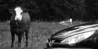 Occasionen---Neuwagen-Peugeot-Peugeot-206-RC,-2003,-166900-km,----10